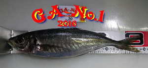 2016_4
