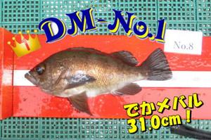 Dm_1_jpg